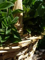 basket of oregano